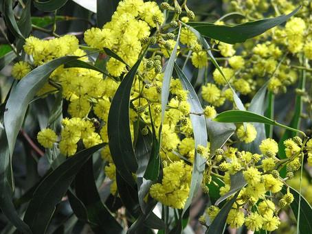Australian Flower Emblems