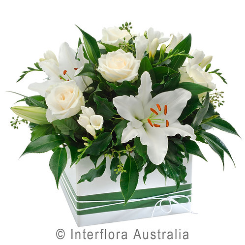 Floral DeVine Hunters Hill White Flower Box Arrangement Daily Delivery Gladesville Woolwich Lane Cove Putney Drummoyne Ryde