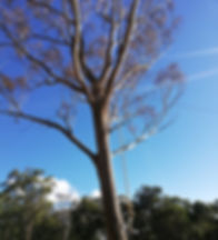 IMG_20190330_165052_edited.jpg