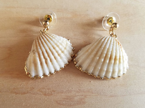 Gold Edge Shell Earrings