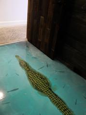 Glass Floor with Alligator
