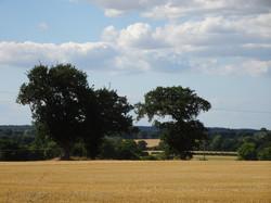 Field in Wood Dalling