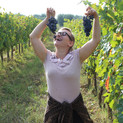 Focus on our grape verieties: Malvasia Nera or Tempranillo? by Seila Bruschi, WSET Somm.