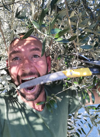 March 2020, olive pruning!
