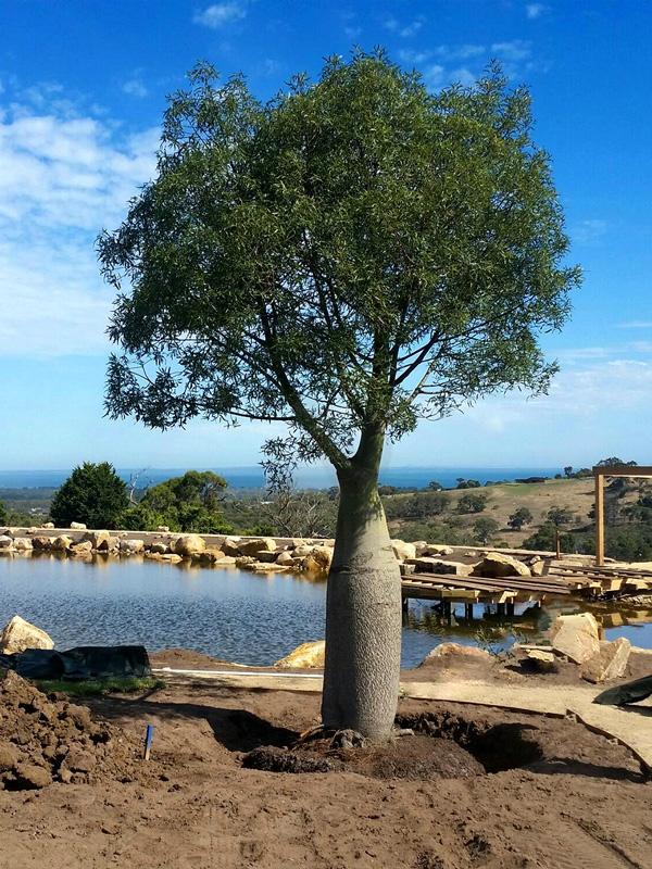 2000L Brachy Planted Eden Gardens