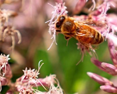 Bee Amazing Today