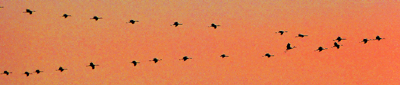 . . . They Fly Overhead In Formation