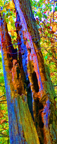 Unseen Colors XVI