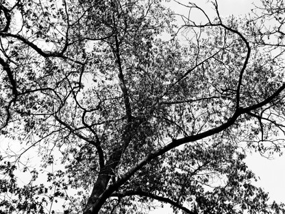 Tree XVI