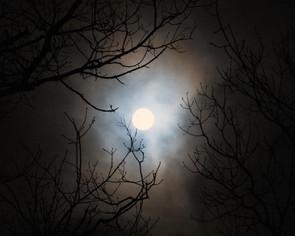 Moon Tree II