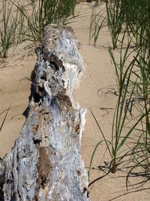 Beach Tree Progression 1A