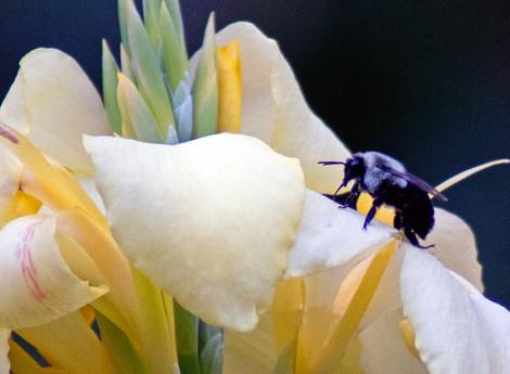 Blue Bee! Blue Bee! Why So Sad?