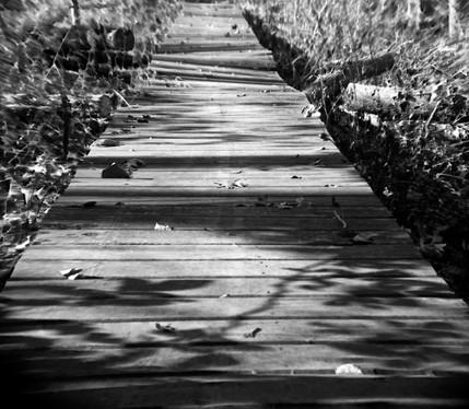 Wood Walk In The Wood