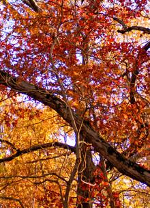 Another Autumn Sunset