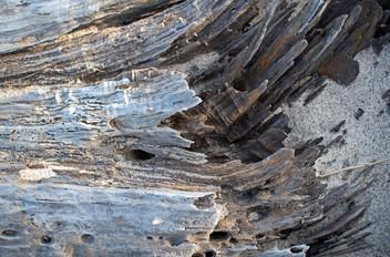 Texture XI