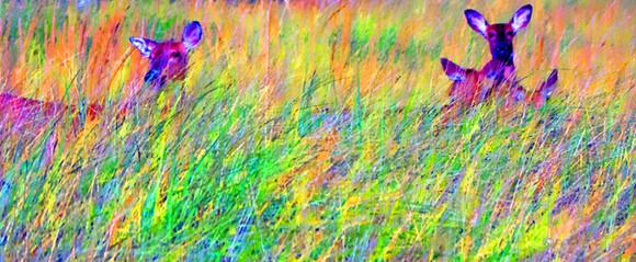 Unseen Colors XXXII