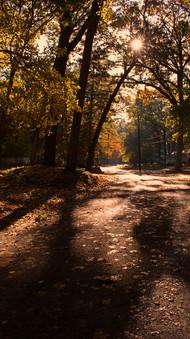 Autumn In The Neighborhood