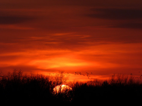 Sun & Sky