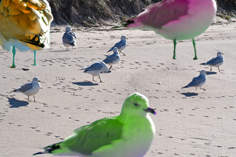 """""""In hindsight; the sudden appearance of the neon gulls probably should have alarmed humanity more..."""""""