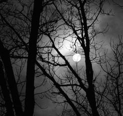 Moon Tree I