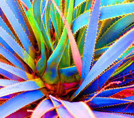 Unseen Colors IIV