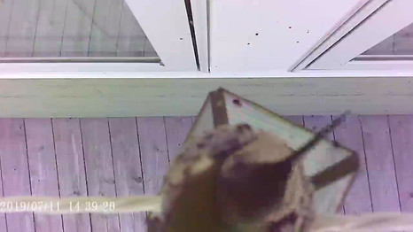 Hummingbird Parenting 101 - Feed The Baby