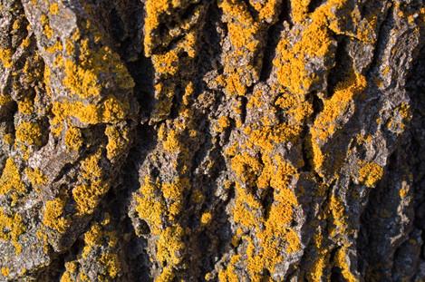Texture I