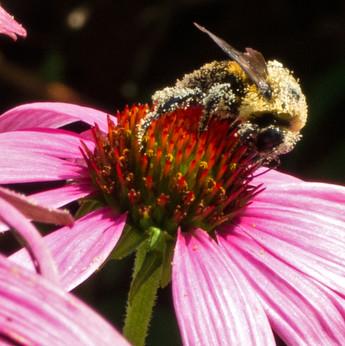 Pollen Swiffer