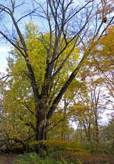Tree IX