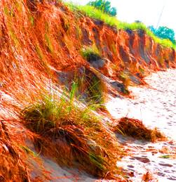Dune Roots V