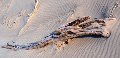 Beach Tree II
