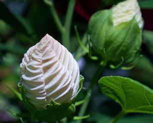 White Hibiscus Origami