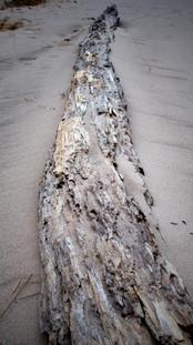 Beach Tree Progression IB