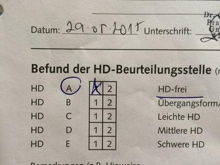 Was ist HD (Hüftdysplasie)