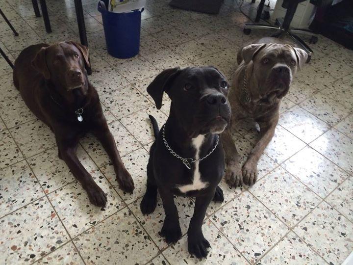 Die drei Herren von der Tankstelle 😂