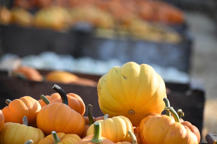 "Jack ""B"" littles and other mini pumpkins"