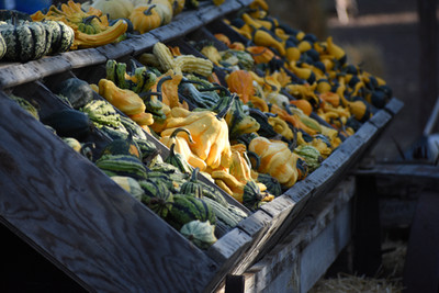 Gourds Galore