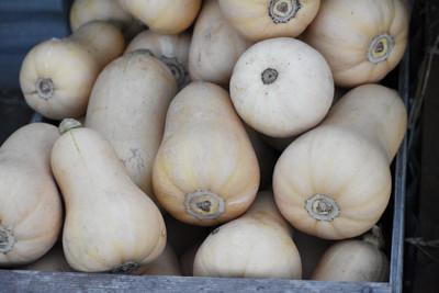 2018 butternut squash