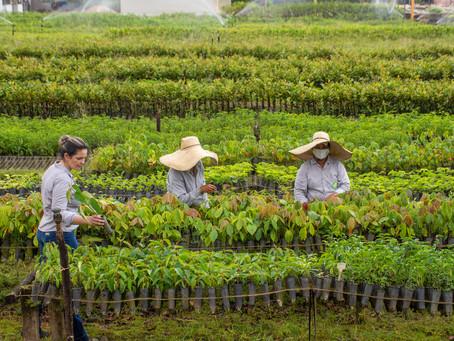 Mulheres se destacam na força de trabalho do viveiro Ouro Verde