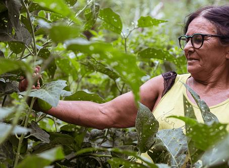 Restauração de 77 mil hectares de áreas degradadas pode gerar R$ 23 milhões por ano no Alto Rio Doce
