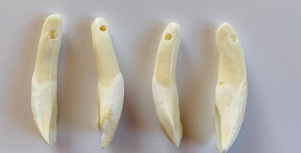 Water Buffalo Tooth