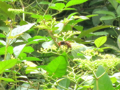 スズメバチが庭に来るようになったら