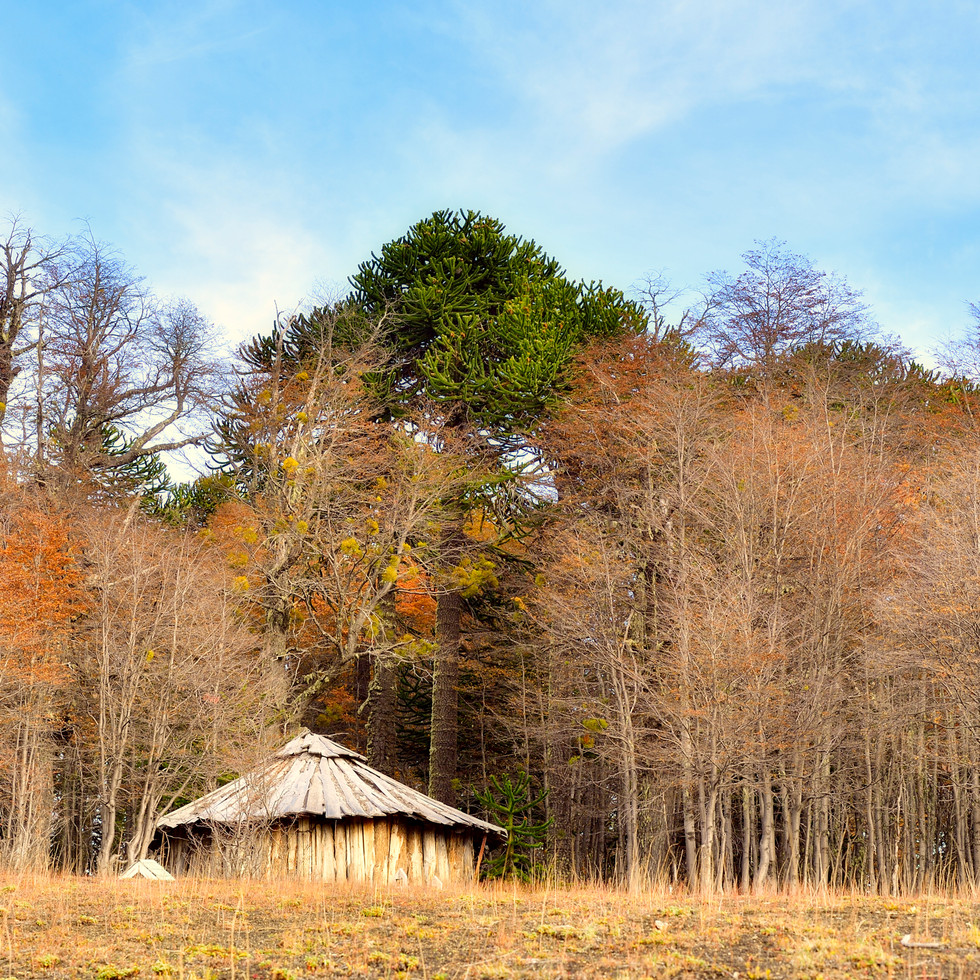 Casa en el Bosque6.jpg