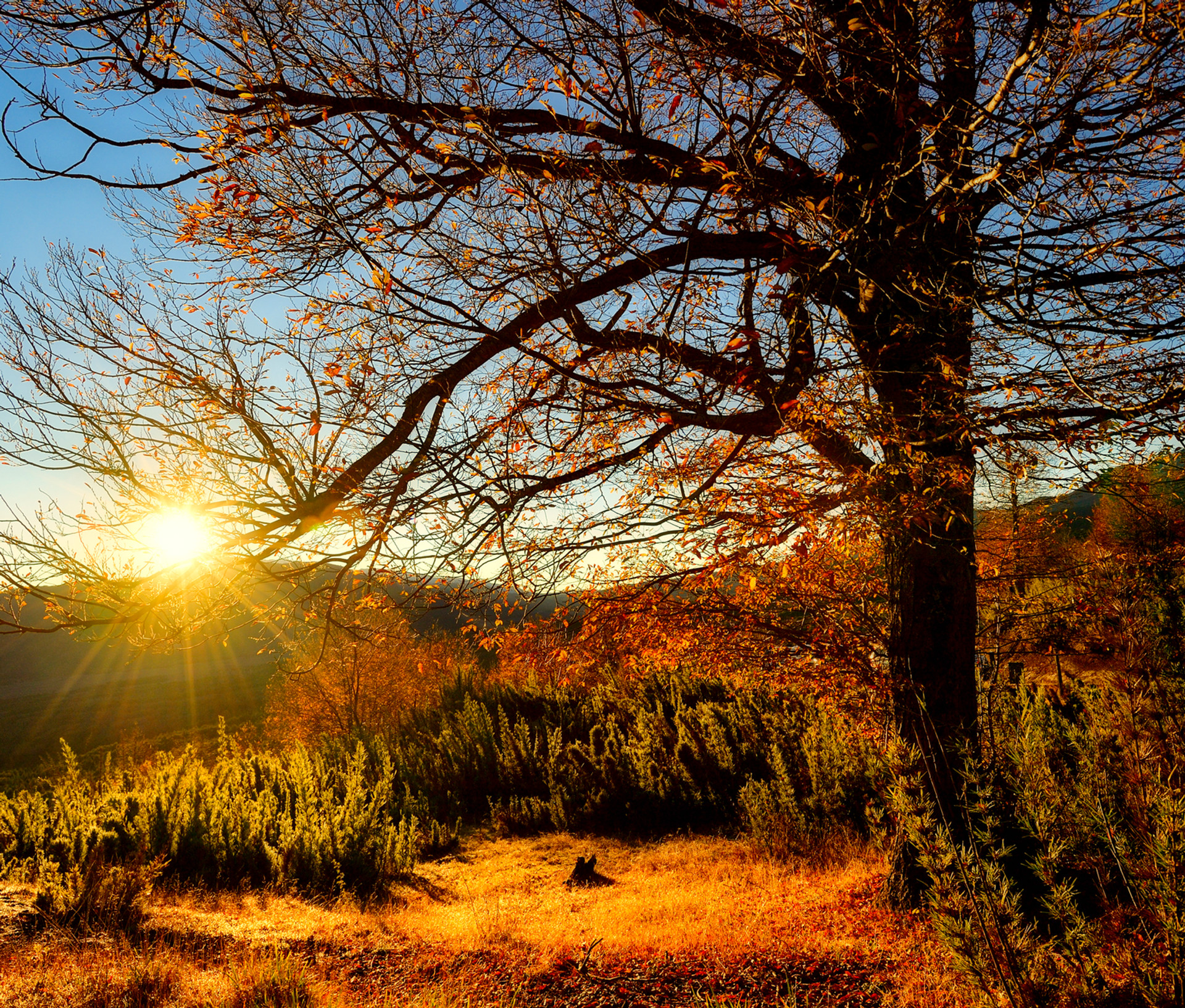 Sol_en_el_árbol.jpg
