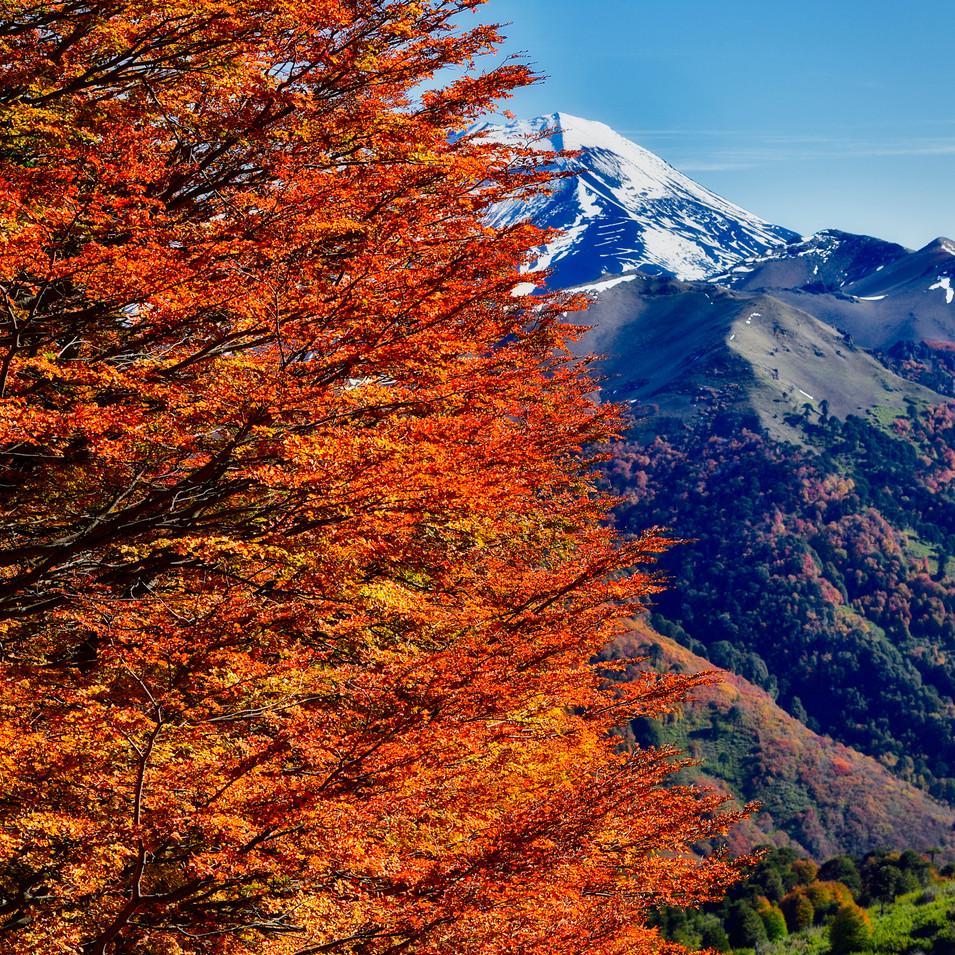 arbol_y_montaña-2.jpg