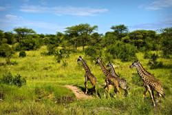 Сафари Парк Танзания