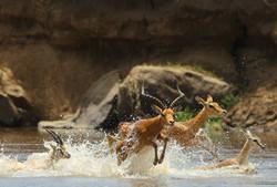 Самый большой парк Сафари