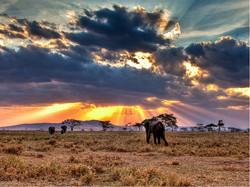Сафари Танзания