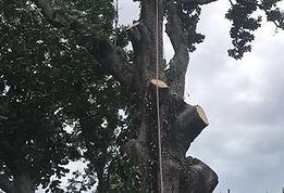 Tree service Virginia Beach