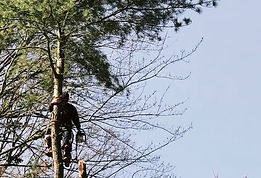 Tree service chesapeak